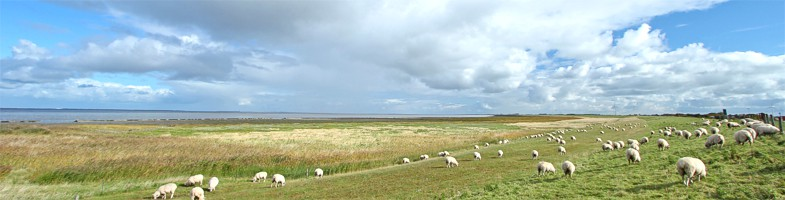 Wellness an der nordsee in ostfriesland bernersiel for Hotel direkt an der nordsee